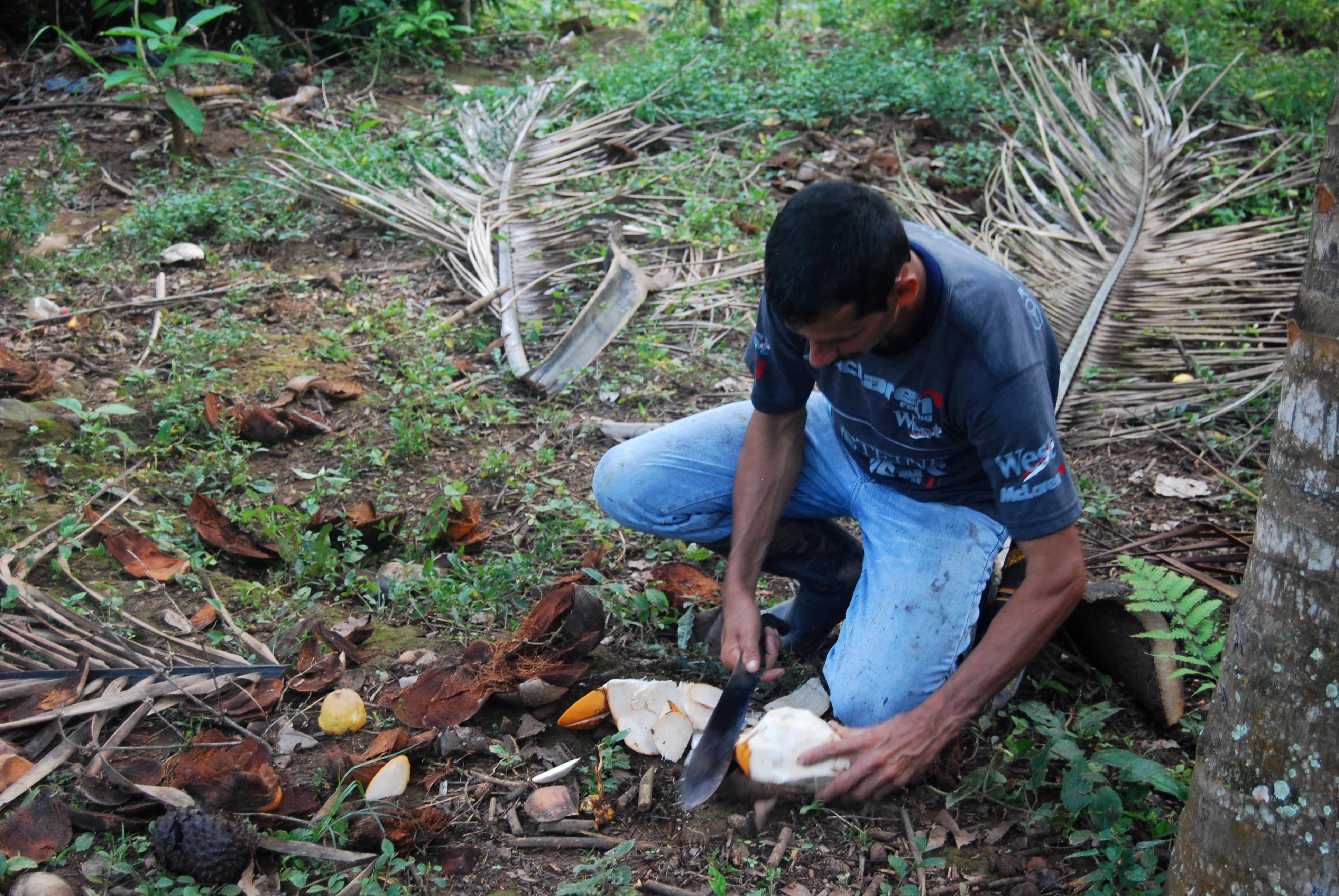 ¡Acción urgente! Comunidades agromineras del sur de Bolívar en grave peligro